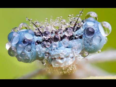 Amazing Insects in the Morning Sun (Full HD 1080p 2013)