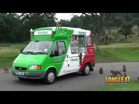 Ice Cream Van Serves up Summer Treat for Longleat Monkeys