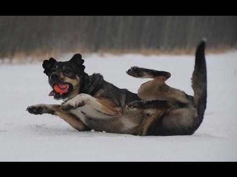 Veamos que el hielo y la nieve pueden ser al mismo tiempo divertidos y dolorosos...