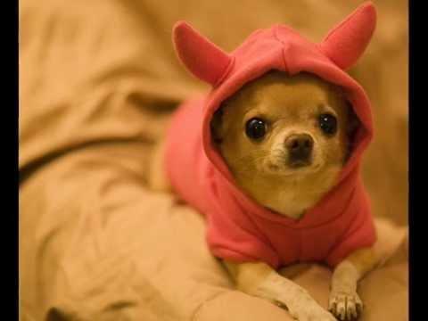 los perritos y gatitos más bonitos y chistosos^^
