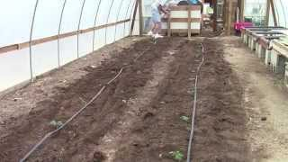 Planting Tomatoes - Super Italian Paste Tomatoes to Make the Best Tomato Soup