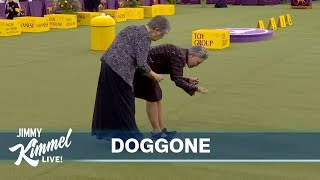 The Westminster Dog Show Without Dogs