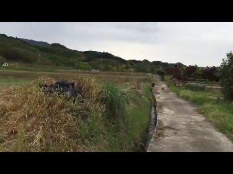 Farm Fields in Japan