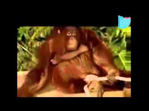 Секс девушки с орангутангом порно 1 фотография