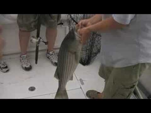 Striper Fishing on Long Island Sound