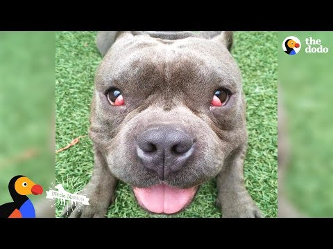 'Crazy' Dog No One Wanted Meets Family That HAD To Have Him - TUGGY | The Dodo Pittie Nation