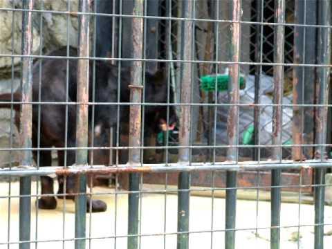 片腕のジャガーby野毛山動物園