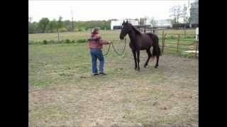 Millie on April 22 2012.wmv
