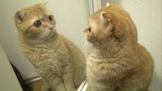 Funny Pets & Animals vs Mirrors Reaction Videos | Video Compilation #5