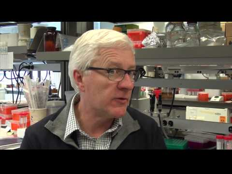 Cancer research discovery: pre-leukemic stem cell at root of AML, relapse