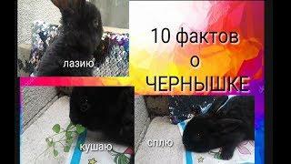 10 ФАКТОВ О КРОЛИКЕ ЧЕРНЫШКЕ | family pet's