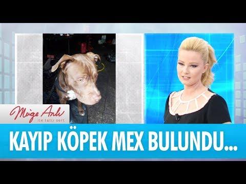 Kayıp köpek Mex bulundu... - Müge Anlı İle Tatlı Sert 8 Kasım