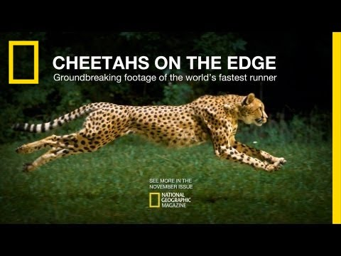 Cheetahs on the Edge � Director's Cut