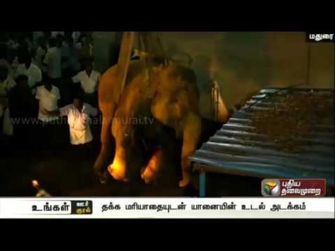 Kudalagar Perummal Temple Elephnat Dies of Bad Health