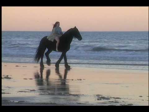 Friesian Horses Running Friesian Horses