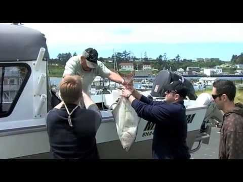 Big Pacific Halibut Fishing