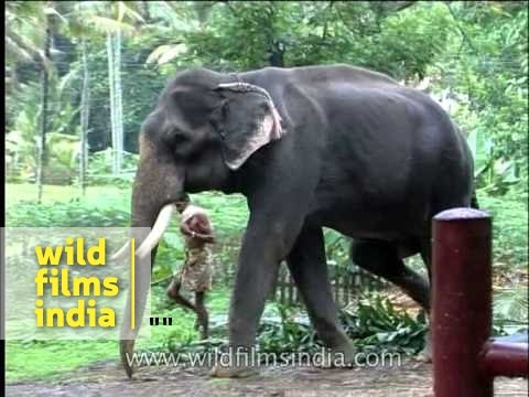 Elephant attack in kerala forest - photo#20