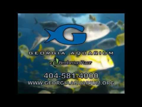 Georgia Aquarium - Atlanta Channel