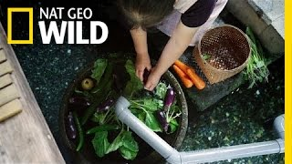 Unusual Kitchen Helpers | Wild Japan