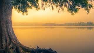 "Peaceful Music, Relaxing Instrumental Music, Study Spa music ""Trees of Life"" by Tim Janis"