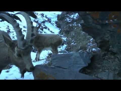 A Virtual Tour Of Shamshy Wildlife Sanctuary