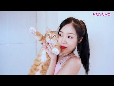 SEVENTEEN 세븐틴 어쩌나 (Oh My!) 춤추는 고양이 치즈 Waveya