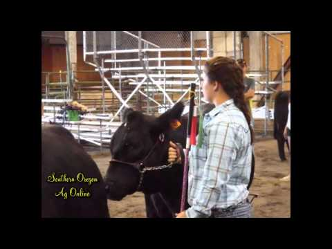 Klamath countyj livestock auction 20130811