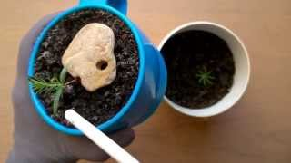 Как сажать семена деревьев 81