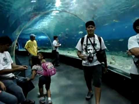 Full view of Manila Ocean Park July 25, 2011: OCEANARIUM