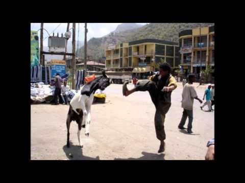 Ethiopian Funny Pictures