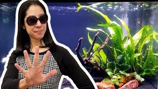 5 Things I Wish I Knew Before Starting a Planted Aquarium