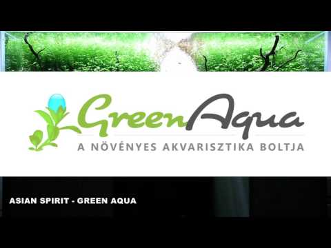 Asian Spirit - my latest planted aquarium