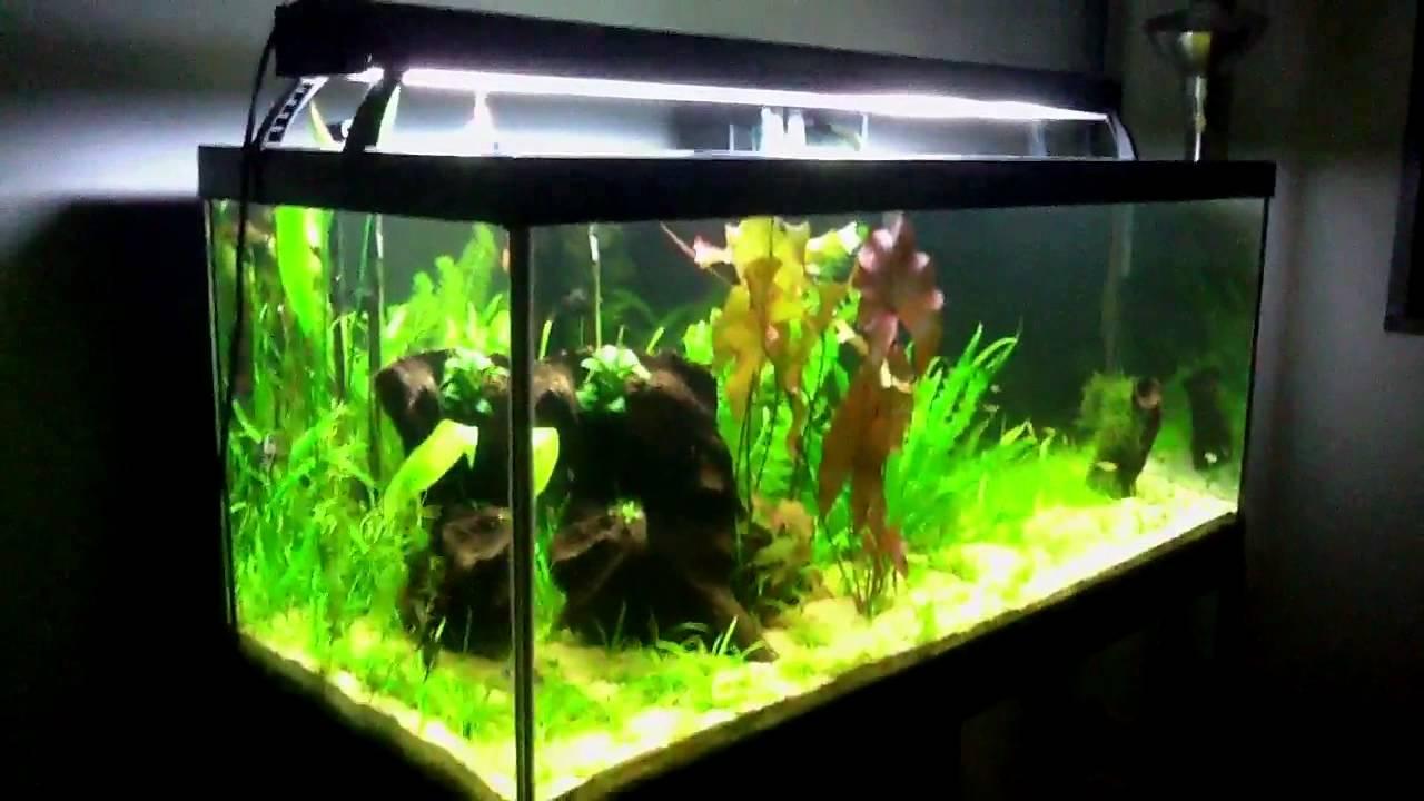 75 Gallon Planted Aquarium Week 10 - YouTube