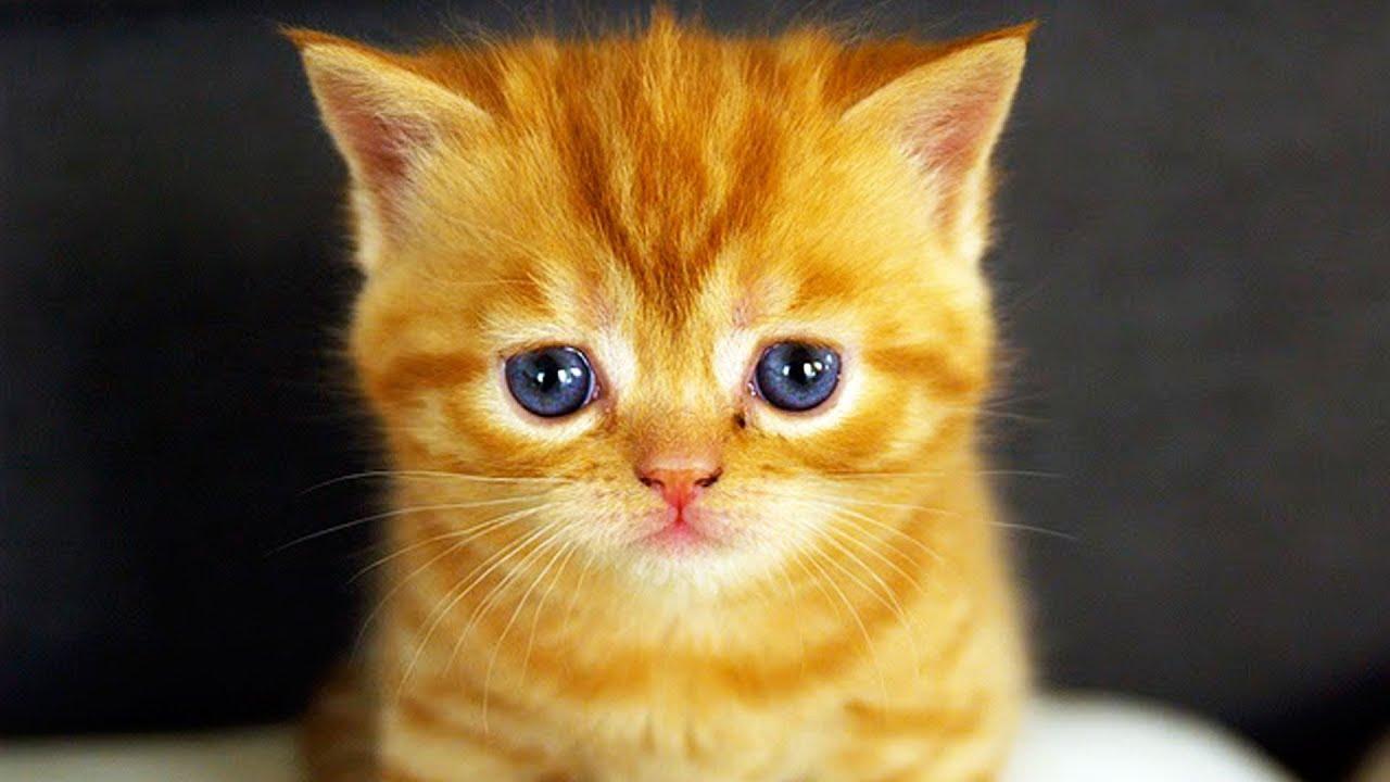 Killer Cats - YouTube