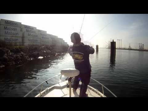 Spotted Bay Bass fishing inside LA Harbor