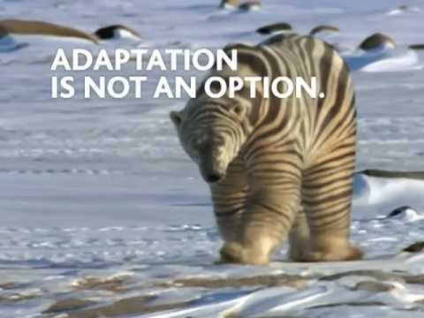 Adaptation is not an option