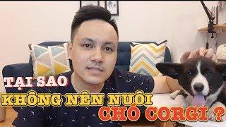 NHỮNG AI KHÔNG NÊN NUÔI CHÓ CORGI? | Zớ Zẩn Vlog #11