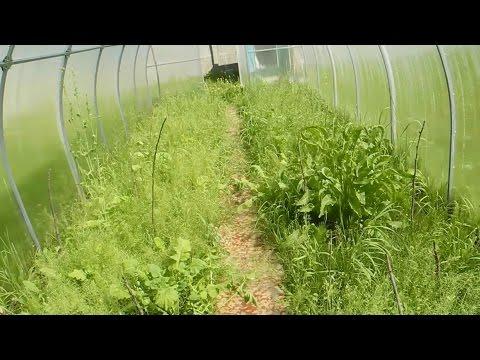Фантастический способ, повысить урожайность в теплице ч.2