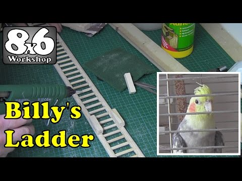 002 Billy's Ladder - Disability Build for aged Cockatiel