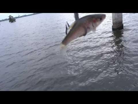 สุดยอดการตกปลาของชาวพม่า myanmar Fishing stile