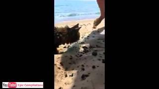 Youtube Video Divertenti Gratis Gatti Divertenti 15