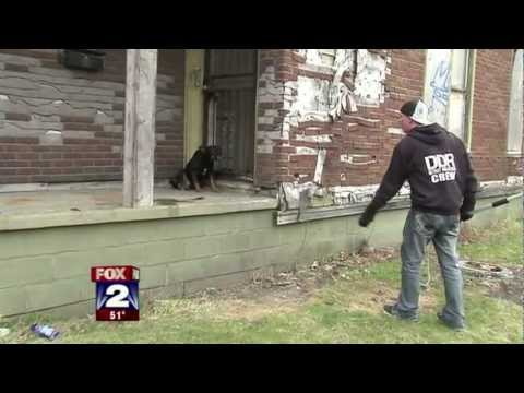 Detroit Dog Fighting Caught on Video