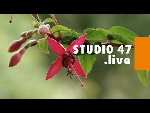 """STUDIO 47 .live   AUSSTELLUNG """"FUCHSIEN UNTER BUNTEN SEGELN"""" IM BOTANISCHEN GARTEN HAMBORN"""