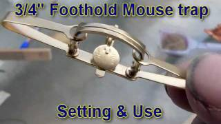 """Proper use of 3/4"""" Foothold Mouse Trap"""