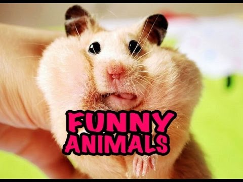 Best Funny Animal Videos Compilation 2014 New Hd video