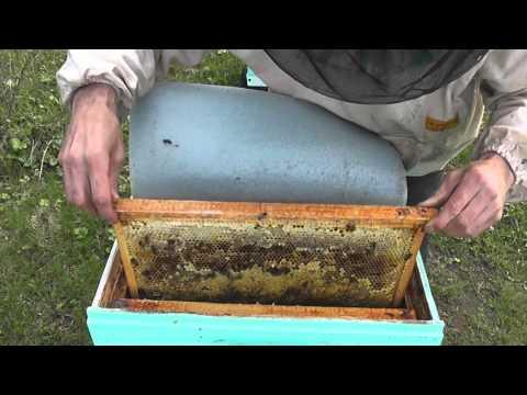 метод Цебро  количество пчёл на 30 апреля