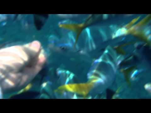 2014 팔라우 용궁투어 #3 Palau underwater feeding fish