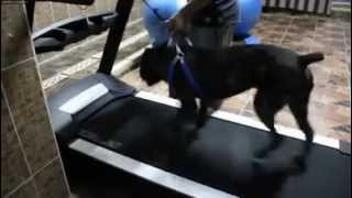 تدريب كلاب فى مصر  kane (behavior rehabilitation , basic obedience & swimming ) training