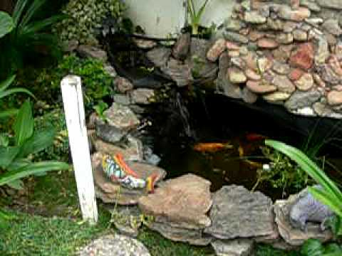 Estanque de carpas koi nishikigoi pond 1 youtube for Peces para limpiar estanques