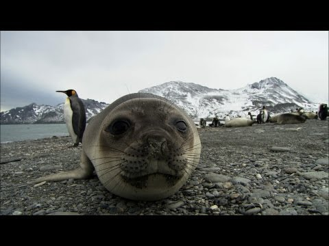 Friendliest seals ever? | Antarctica Ep2